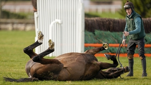 Appreciate It enjoying a roll on the grass of the Cheltenhm gallops this morning