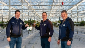 John, Billy, and Joe McGuinness, co-owners of Sunglow Nurseries in Rush, Co Dublin