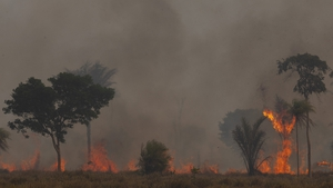 Extreme heat and drought also stoked huge fires that consumed swathes of forest