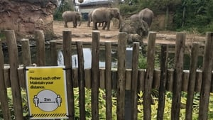 Dublin Zoo has been closed for three quarters of the past year due to Covid-19