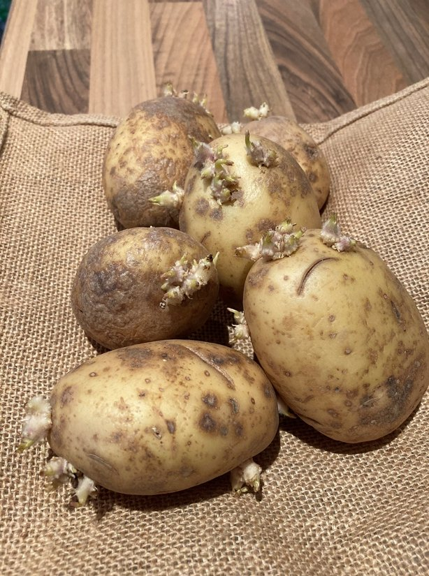 Old potatoes which have sprouted (Hannah Stephenson/PA)
