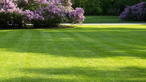 Naturefile - Lawns