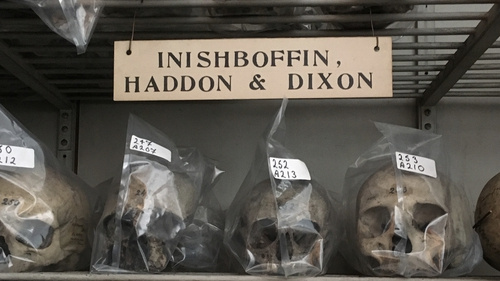 The Haddon Dixon Collection in the Skull Passage in Old Anatomy. Each skull was kept in a protective cover and labelled with its catalogue number in preparation for a conservation programme that is ongoing. Photo: Ciaran Walsh