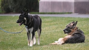 Major (L) and Champ (R) Biden seen on the White House lawn last month