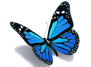 Naturefile - Blue Butterflies