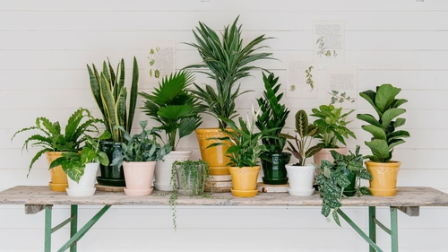 How to repot your houseplants: all your questions answered