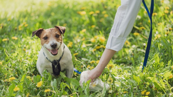 Samples of dog waste in areas with high levels of dog fouling will be taken by the Leitrim animal warden