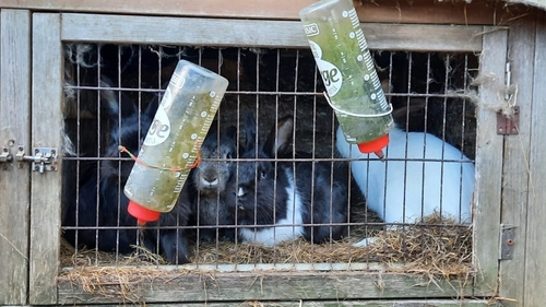 The animals were removed from the petting farm over a two-day period