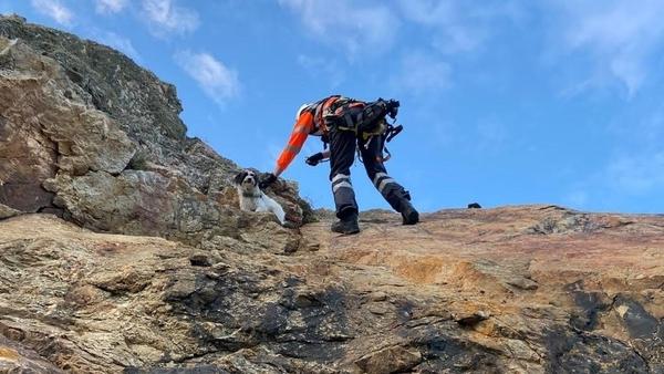 Freddie the dog had fallen 10 metres down a cliff