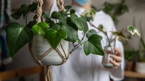 A gardening expert explains whether tunes can really help your garden grow.