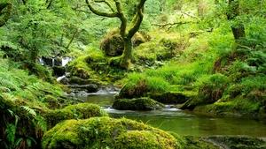 Naturefile - Irelands Atlantic Rainforests
