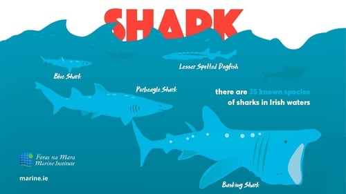 There are 35 species of sharks living in the seas around Ireland. From the lesser spotted dogfish, to the common blue shark and the huge basking shark - the second largest fish in the sea.