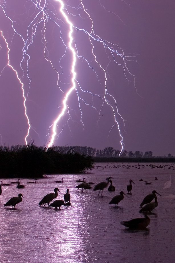 Wading birds illuminated by flashes of forked lightning (Bence Mate/Nature TTL/PA)