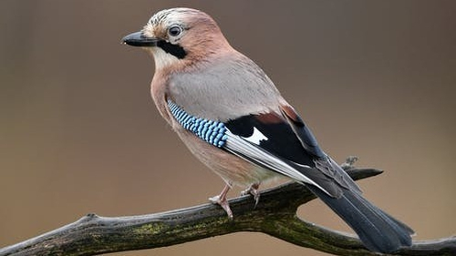 Watch the birdie. Photo: Piotr Krzeslak/Shutterstock