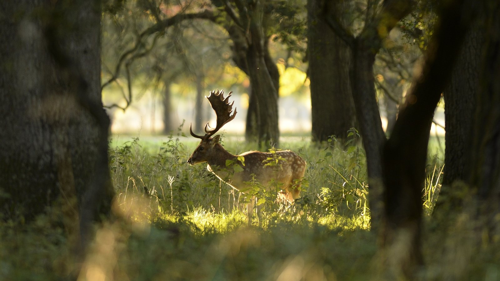 Image - Because it has no natural predator, deer as a species is at the top of the food chain