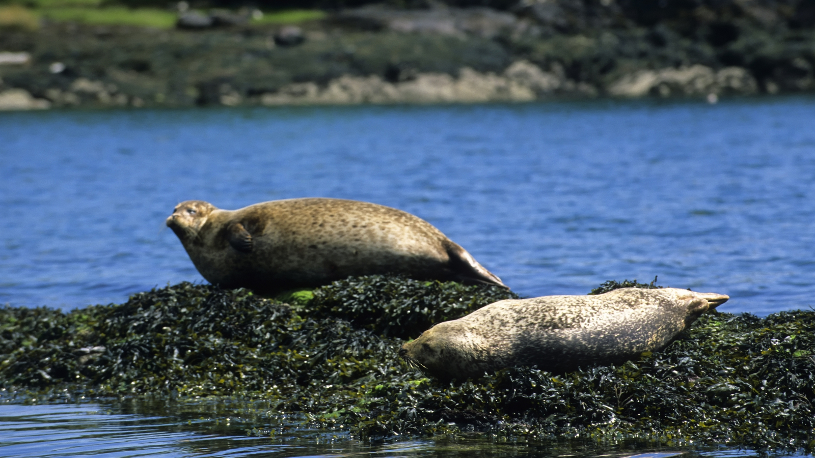 Image - Activists believe there are more sustainable alternatives to culling seals