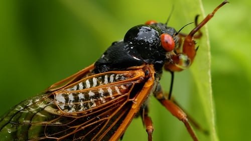 Swarm of cicadas filled the plane's engines