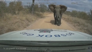 The driver waited for rangers to arrive before getting out of his vehicle