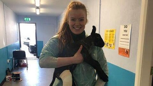 Evelyn McGinley holding a lamb who needed a cast for a broken leg