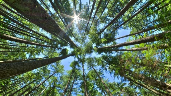 Carbon-absorbing forests, wetlands and grasslands, form the basis of a growing carbon offset market