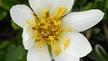 Naturefile - Irelands Alpine Flora