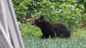 The brown bear injured four people in the city of Sapporo before it was shot dead