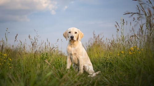 The average cost of pet insurance in Ireland last year was €16 per month, according to Switcher.ie