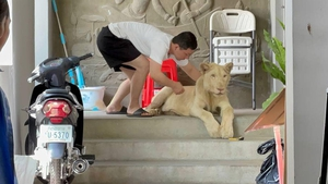 Authorities in Cambodia confiscated the lion after the animal was seen in TikTok videos (Pic: Cambodia Ministry of Environment0
