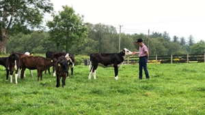 10-year-old William Woods with his calves on his family farm in Co Cavan