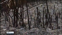 Four people die in forest fire in Cyprus