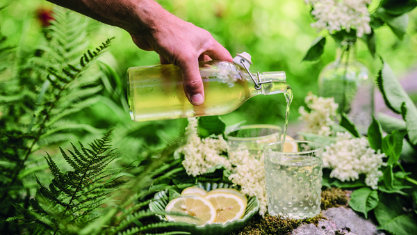 """""""There is something very satisfying about gathering elderflowers at this time of year,"""" says Catherine."""