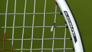 Flying ants distracted players at Wimbledon in 2018