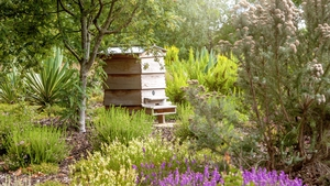 """""""Estimates suggest that there is only a small population of wild hives in Ireland. Most honeybees are part of a managed colony and have a beekeeper"""". Photo: Getty Images"""