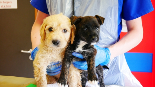 Summer (L) and Solero are being cared for by the DSPCA