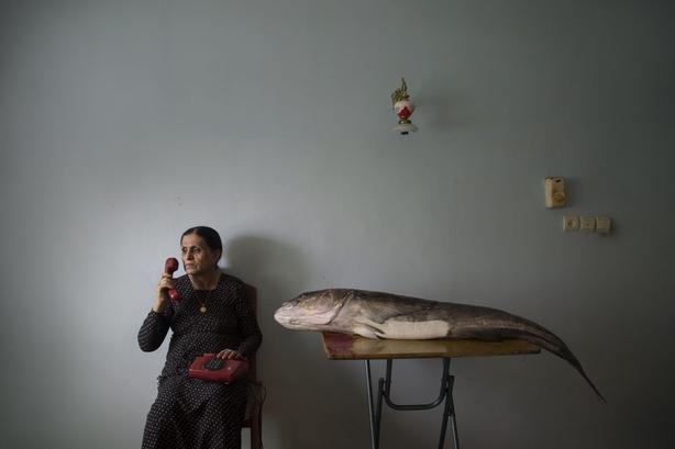 (Morteza Niknahad/Wellcome Photography Prize/PA