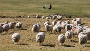 The strategy focuses on agriculture and food production (file image: Rollingnews.ie)