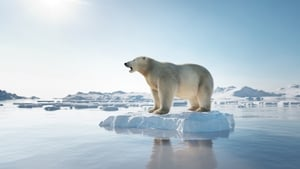 The IPCC report found that Arctic ice is shrinking and sea levels are rising