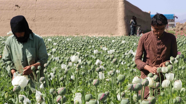 Afghan farmers opium