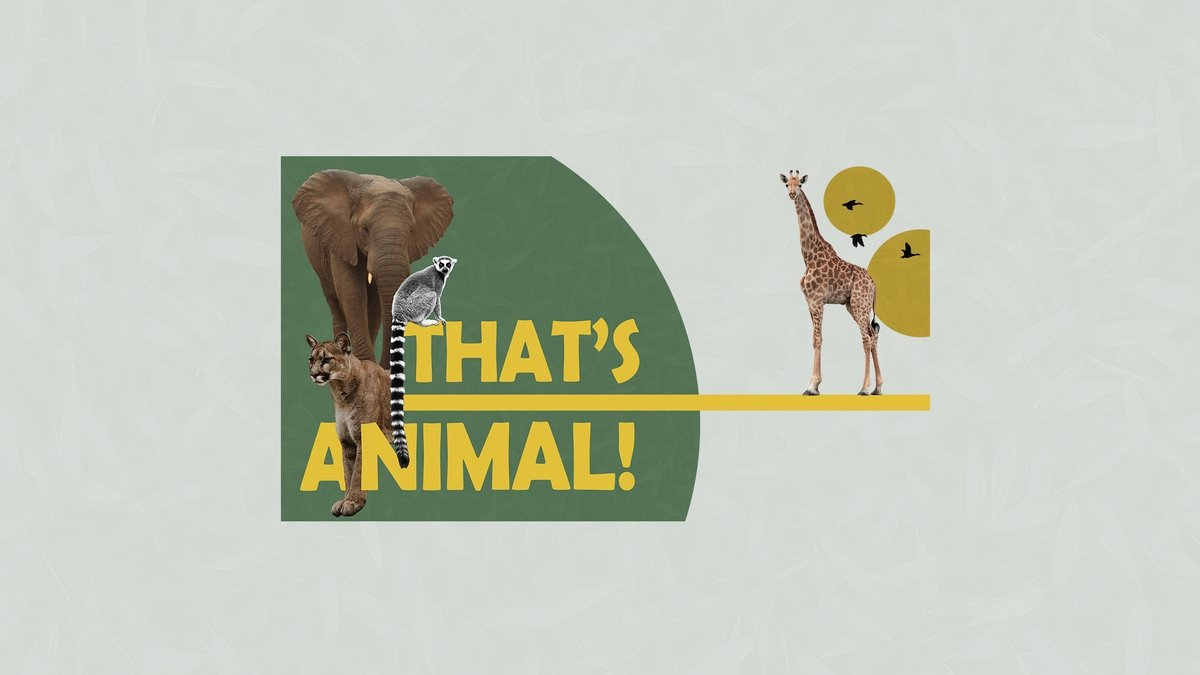 That's Animal