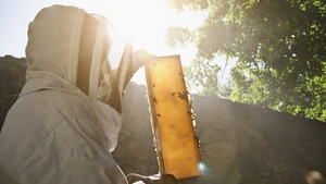 A scorching drought is slashing honey production in North Dakota