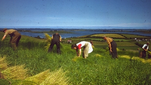 Workers harvesting the flax to make linen in Co Down in 1948. Photo: Merlyn Severn/Picture Post/Hulton Archive/Getty Images