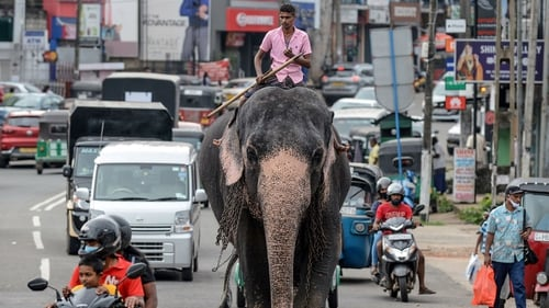 A mahout rides an elephant among the traffic down a street in Piliyandala, a suburb of Sri Lanka's capital Colombo