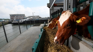The cows live on the top floor of the floating farm