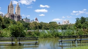 Flooding in New York City's Central Park