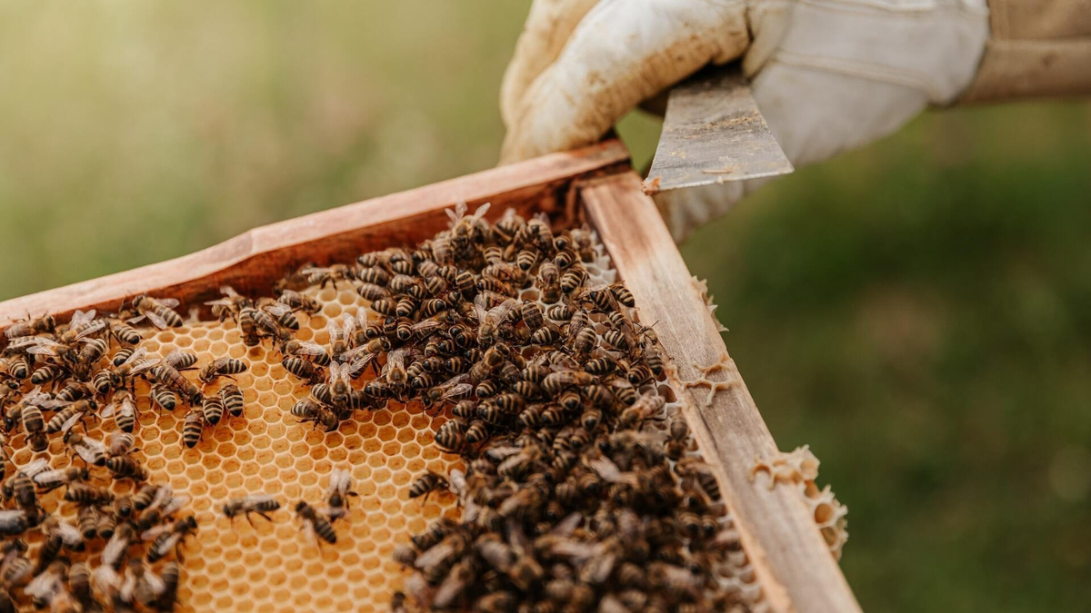 Inner City Bee Keeping with Anthony Freeman