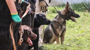 While it's unclear who the dogs belonged to, many were found in the section of the airport that was used by American forces (Getty Images)