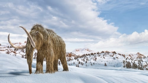 Woolly mammoths roamed much of the Arctic, and co-existed with early humans
