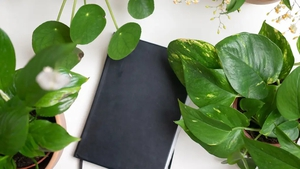 Hannah Stephenson looks at the easiest indoor plants to keep on your desk, and how they can bolster wellbeing.
