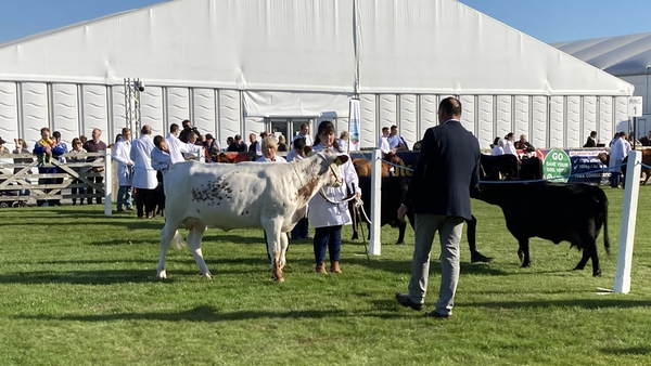 The 152nd Balmoral Show is expected to draw tens of thousands of visitors over four days