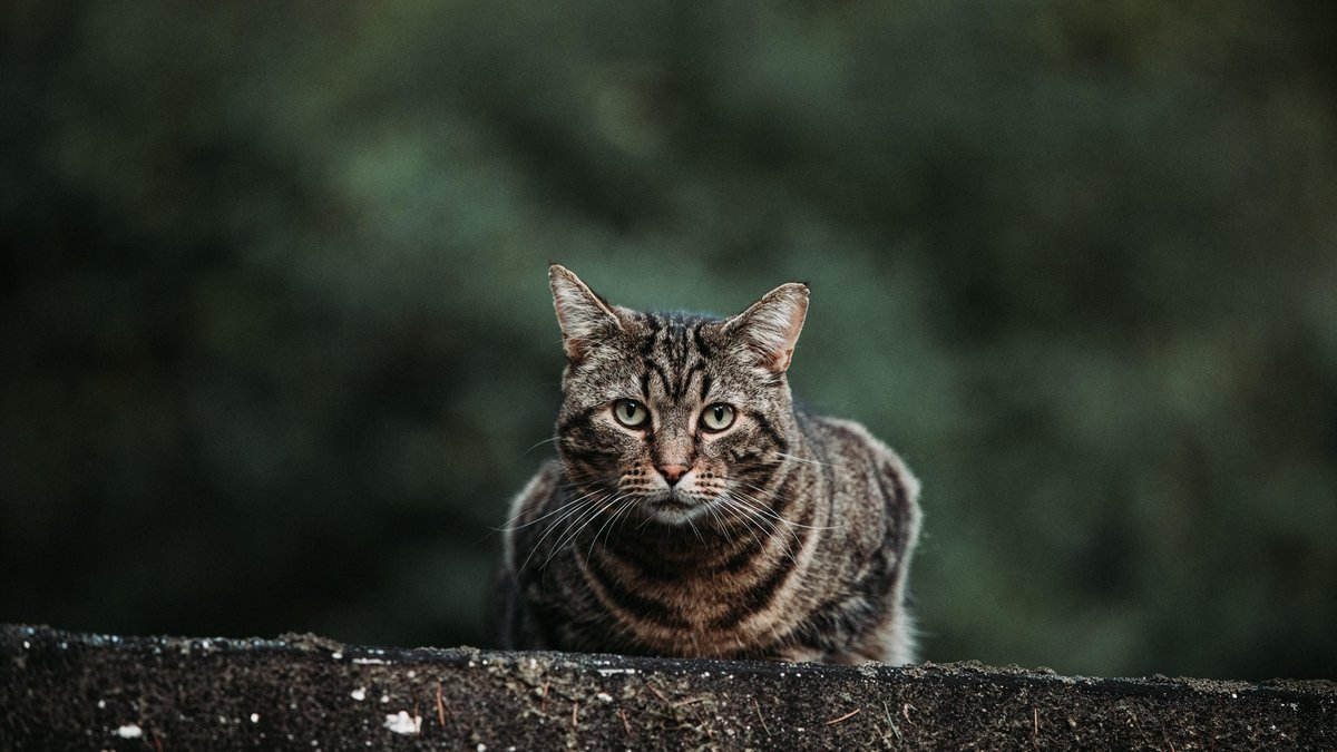 How to deal with Feral Cats with the DSPCA